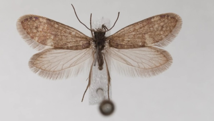 самые старые бабочки на Земле не имели цвета