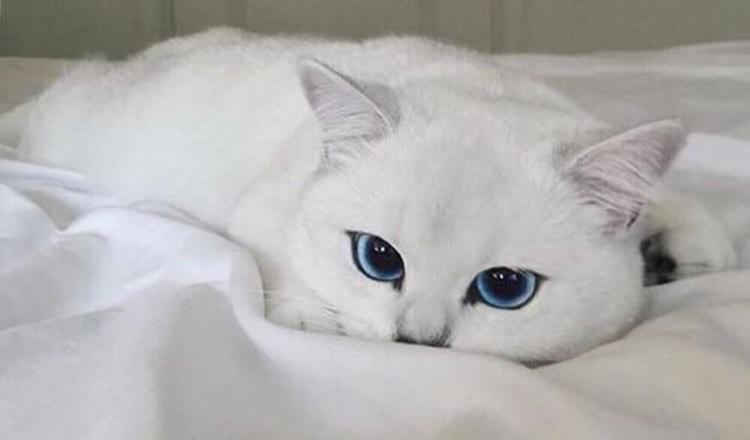 скажет о кошке ее окрас